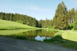 Fly Fishing Bavaria